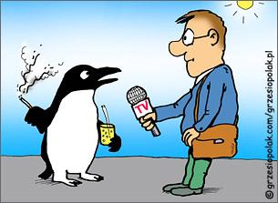 Wdzięczny pingwinek