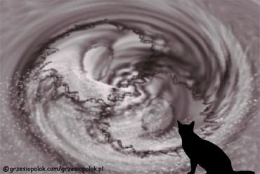 Kotek patrzy na świat