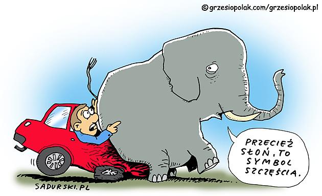 Słoń to symbol szczęścia!
